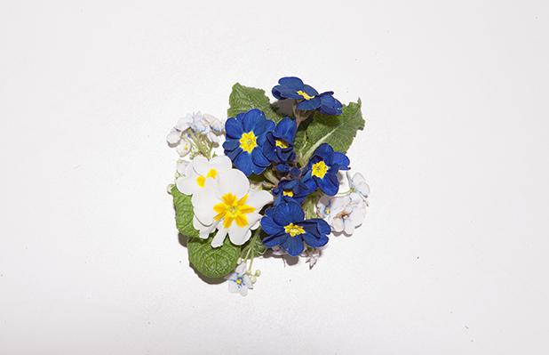 flower-mglory